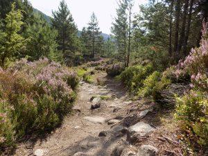 biking trails near aviemore