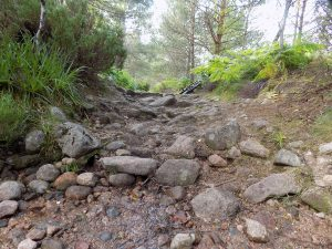 mtb trails near aviemore